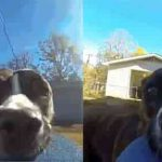 dog theft owner's camera