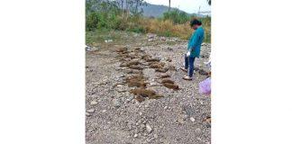 31 Monkeys, 14 Pigeons Die in Suspected Gas Leak from Industrial Unit in Maharashtra