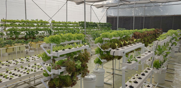 Hyderabad Hydroponics Firm Has a Doorstep Solution for urban farming