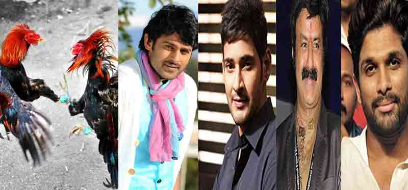 Tollywood cine war will be like cock fight for Sankranthi