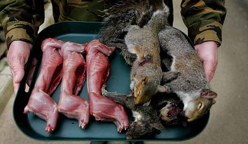 couple died after eating squirrel raw meat