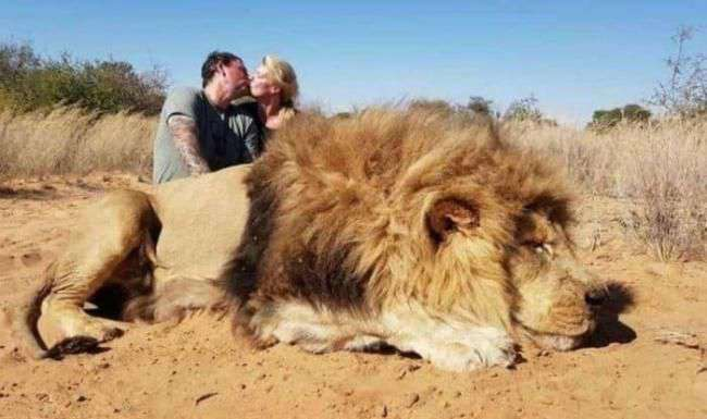 couple-killed-lion-and-took-photos-before-it
