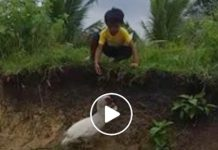 mart duck catching slipper video goes viral