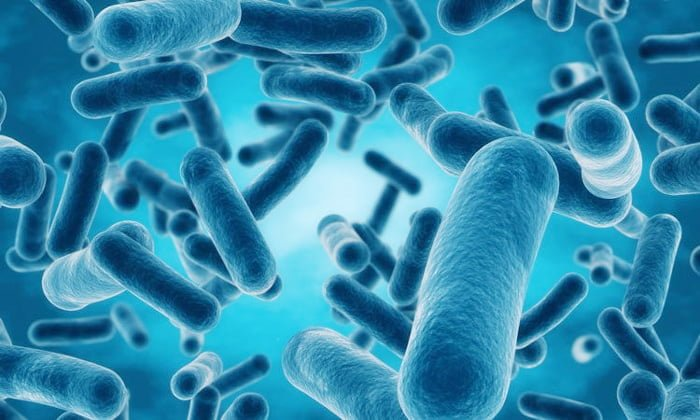 Israel scientists developed a bacteria that takes carbon dioxide