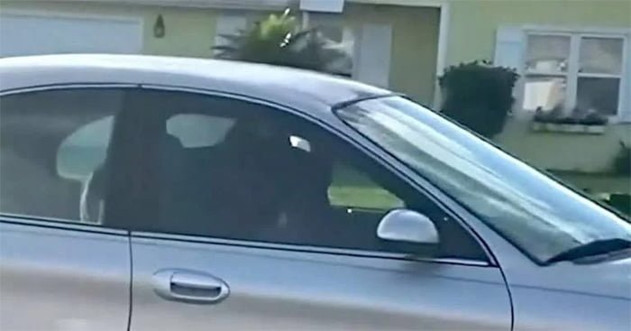 dog drives car in revers for an hour police got shocked to see that