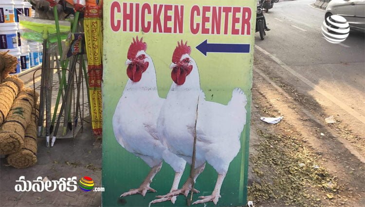 earn good income with chicken center business